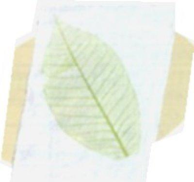 画像2: 紙すきセット(ハガキサイズ)